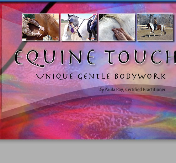 Equine Touch > Unique Gentle Equine Body Work by Paula Ray